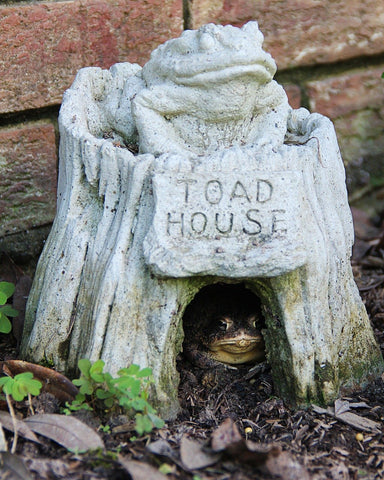 Store Bought Toad House