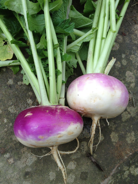 Turnip are a must-have for hardy winter stews, also stand alone as a great side dish.