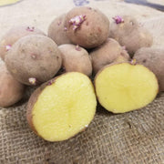 Potato- Red Gold - Sow True Seed