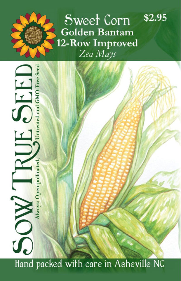Sweet Corn Golden Bantam 12-Row Improved, Heirloom Open-pollinated sweet corn variety, Sow True Seed Corn