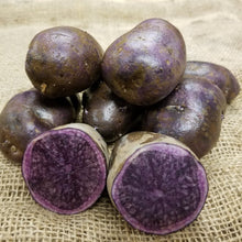 Potato All-Blue Organic seed potato purple root crop