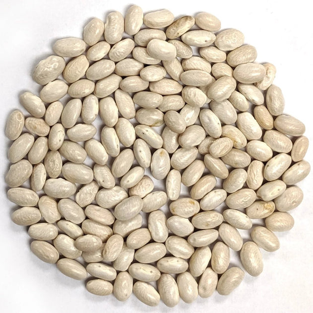 Bean - Fatman Bean Pole Bean seeds, Kentucky blue speckled beans ...