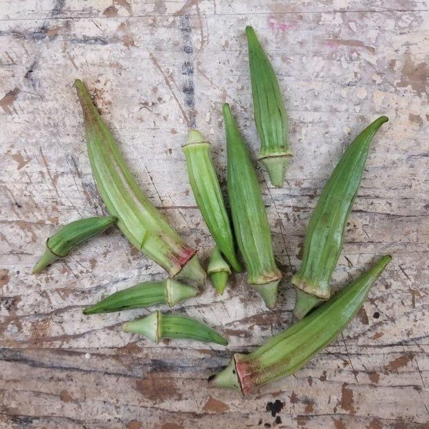 Bear Creek Okra seeds