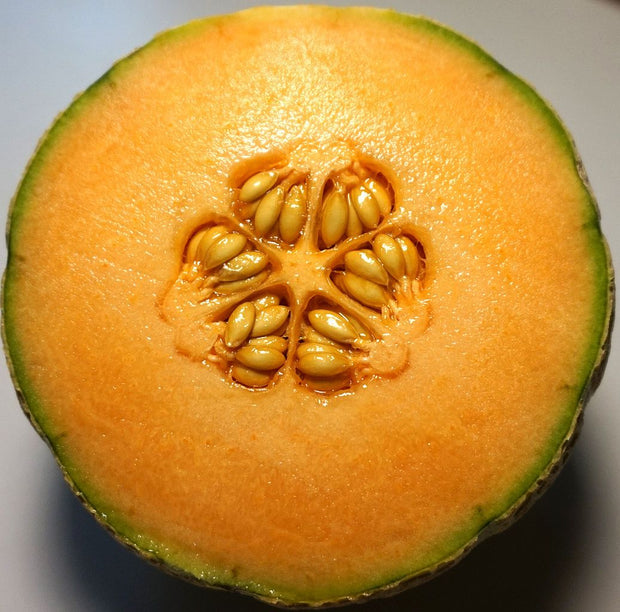 Organic Amish Cantelope seeds, an heirloom sweet orange fleshed melon.