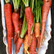 Carrot - Atomic Red - Sow True Seed
