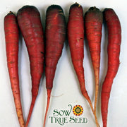 Carrot - Cosmic Purple - Sow True Seed