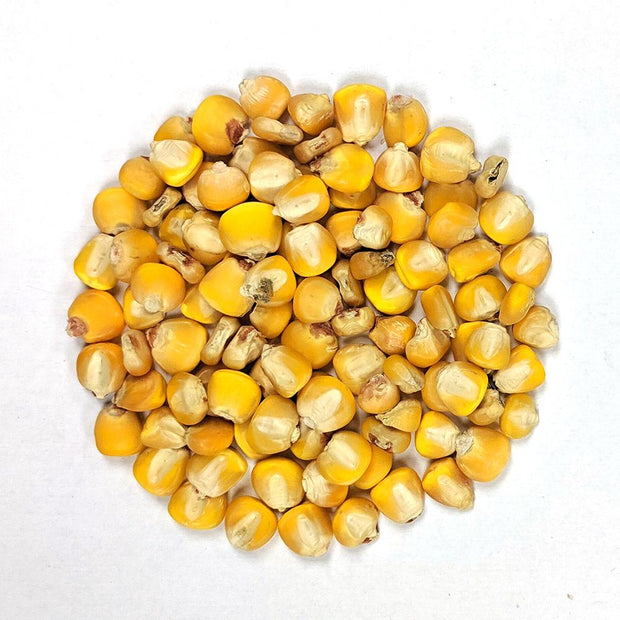 Dent Corn - Hickory King Yellow - Sow True Seed