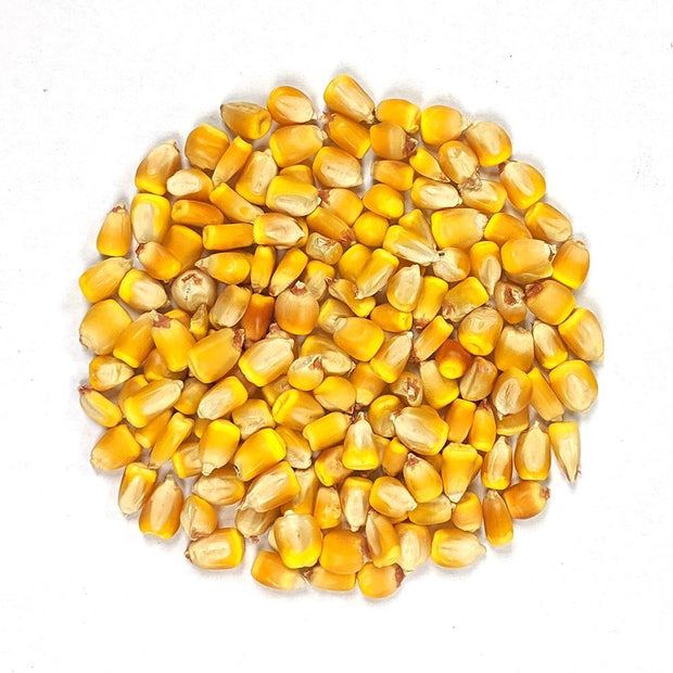Dent Corn - Reid's Yellow - Sow True Seed