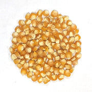 Golden Bantam 12 Row Improved Corn Kernels