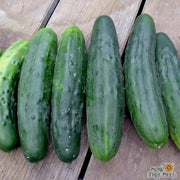 Slicing Cucumber - Marketmore 76, ORGANIC - Sow True Seed