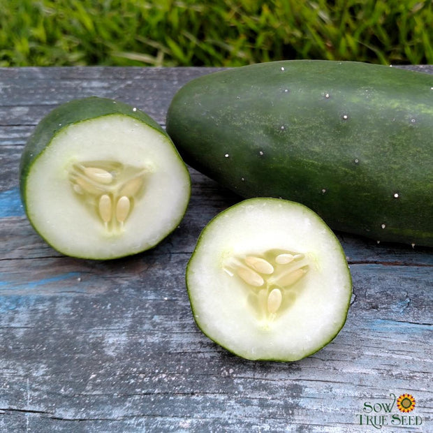 Cucumber - Marketmore 76 Slicing, ORGANIC - Sow True Seed