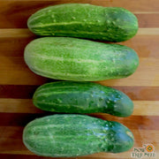 Pickling Cucumber - Bush Pickle - Sow True Seed