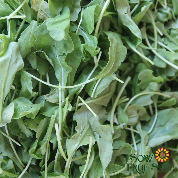 Arugula - Slow Bolt - Sow True Seed
