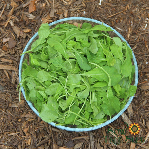 Arugula seed, organic cool-season edible green