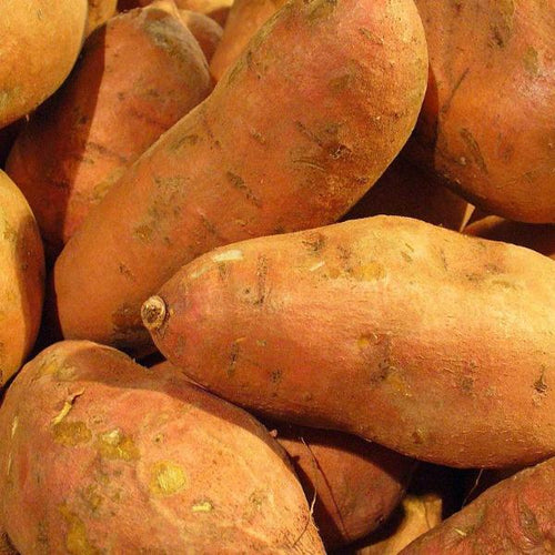 Sweet Potato - Hernandez, ORGANIC