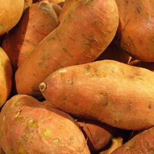 Sweet potato slips- Organic Hernandez variety, very sweet sweet potatoes