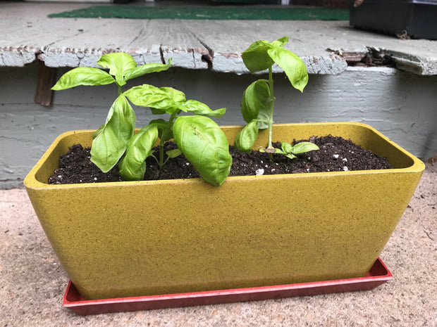 Accessories - Ecoforms - Pot - Window Box - Sow True Seed