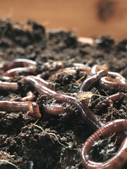 Mar 7 2020: Kids' Program>> Worms!! - Sow True Seed