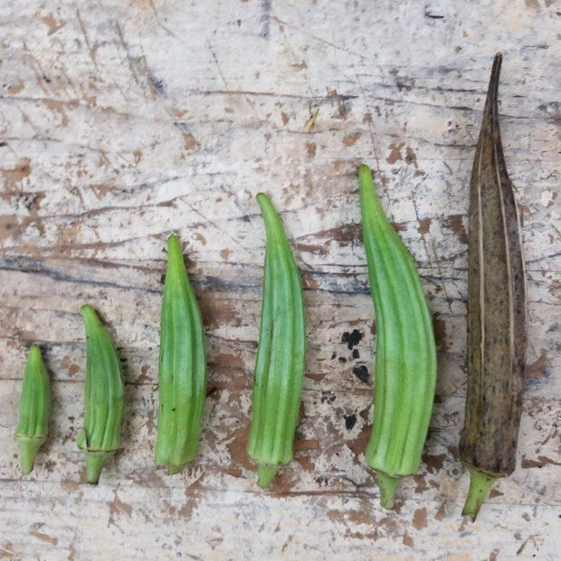 kibbler kibler family okra pods seeds