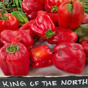 Sweet Pepper - King of the North, ORGANIC - Sow True Seed