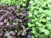 Jan 27 2020: Growing Microgreens for Personal Use - Sow True Seed