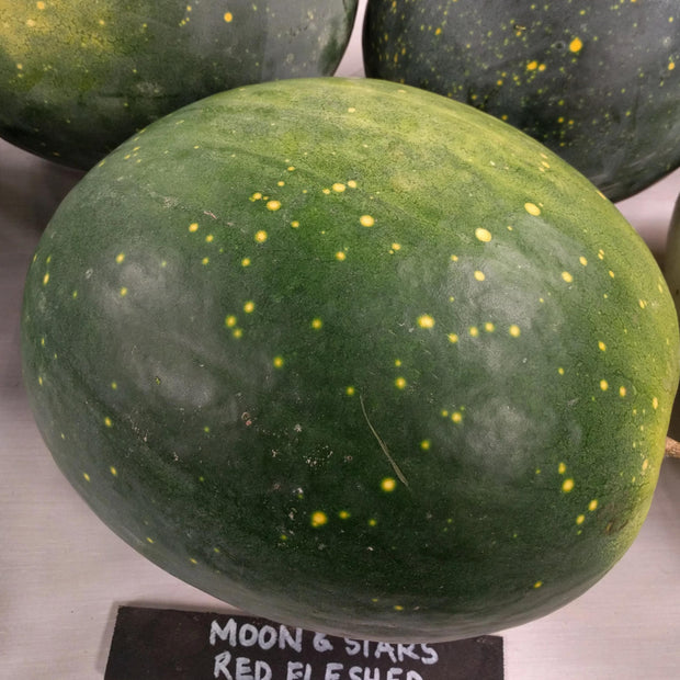Watermelon - Moon and Stars Red