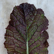 Mustard Greens - Giant Red - Sow True Seed