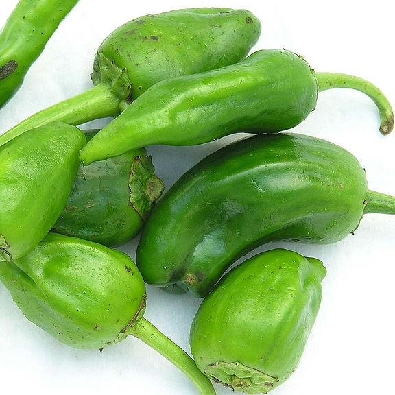 Organic Hot Pepper seeds- Padron : Mild to medium hot peppers, best flavor when picked small.