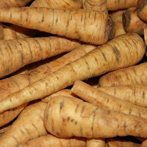 "Parsnip seeds- Harris Model: Reliable sweet and spicy producer wtih 10"" long roots."