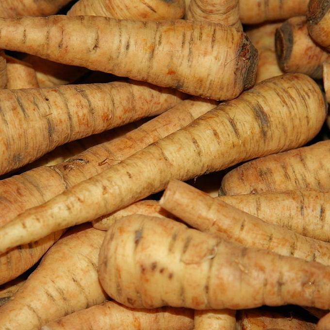 Parsnip seeds- Harris Model: Reliable sweet and spicy producer wtih 10