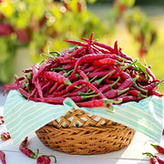 "Hot Pepper seeds- Cayenne Long Red Thin: Heirloom hot 4-6"" long fruits arrive early, ripen green to red."
