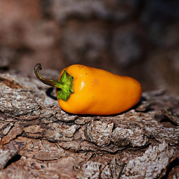 Hot Pepper - Aji Amarillo - Sow True Seed