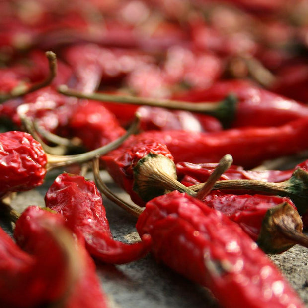 Hot Pepper - Catarina