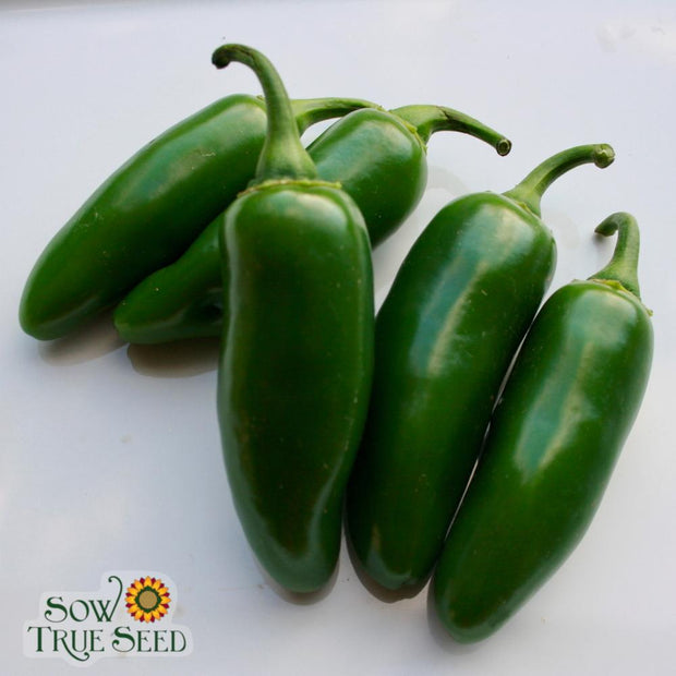 Hot Pepper seeds- Early Jalapeno: Medium hot flavor, best variety for cooler climates.
