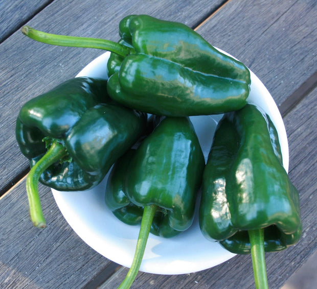 Hot Pepper seeds- Poblano : Medium hot pepper ripens from dark green to red, also known as Ancho when dried.