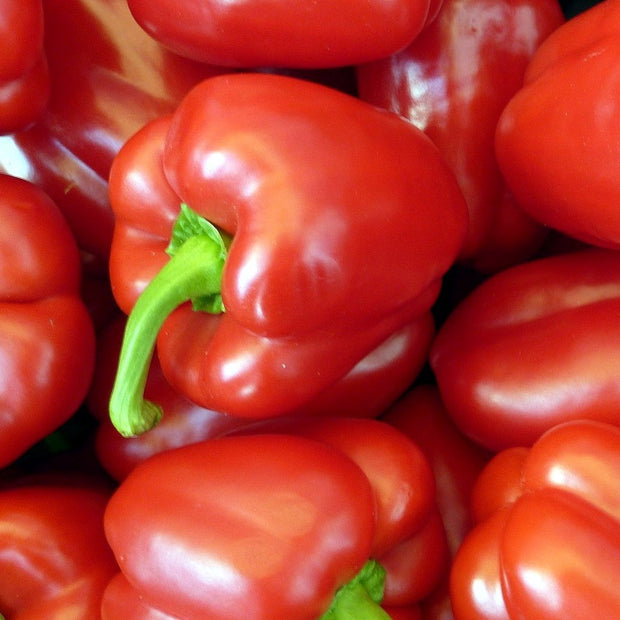 Sweet Pepper seeds - Big Red: Sweet high yielding juicy pepper that ripens green to red.