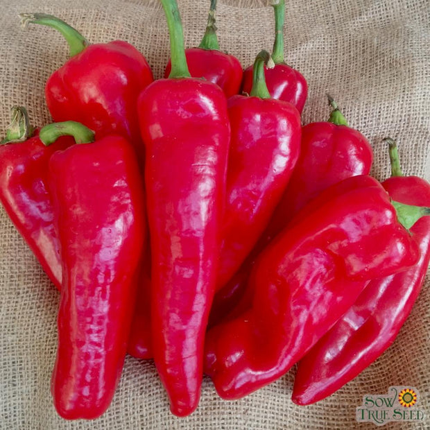 "Sweet Pepper seeds - Corno di Torro Rosso: Heirloom high production peppers with thin 8-10"" curved fruits."