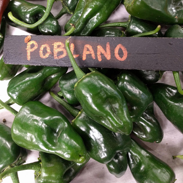 Hot Pepper - Poblano - Sow True Seed