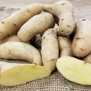 Seed Potatoes - Austrian Crescent Fingerling - Organic and Certified