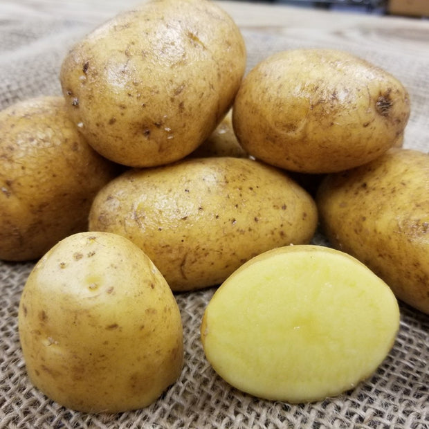 Certified German Butterball Organic Seed Potatoes - yellow flesh
