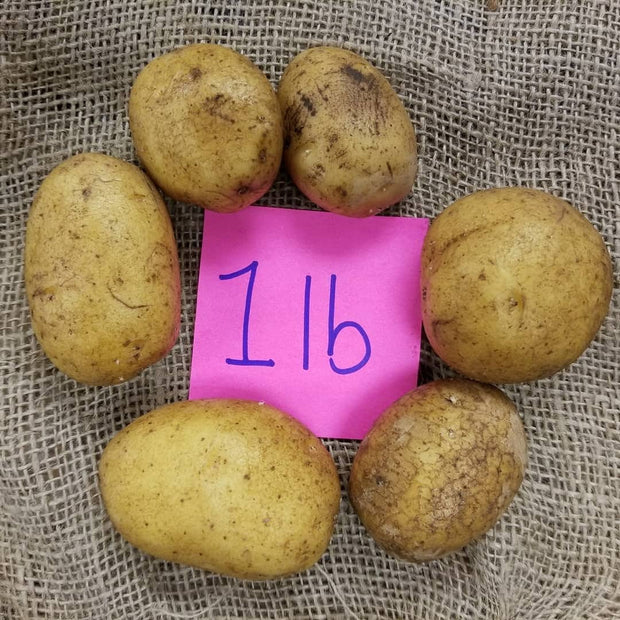 Certified German Butterball Organic Seed Potatoes - 1lb size