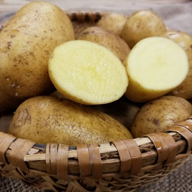Certified German Butterball Organic Seed Potatoes