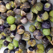 Tomatillo - Purple - Sow True Seed
