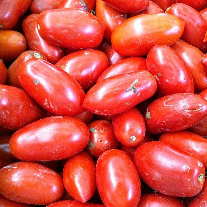 Tomato seeds - San Marzano : Heirloom compact and prolific producer of bright red 2-3