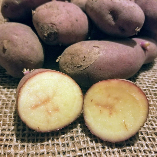Seed Potatoes - French Fingerling - Organic and Certified