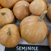 Pumpkin - Seminole - Sow True Seed