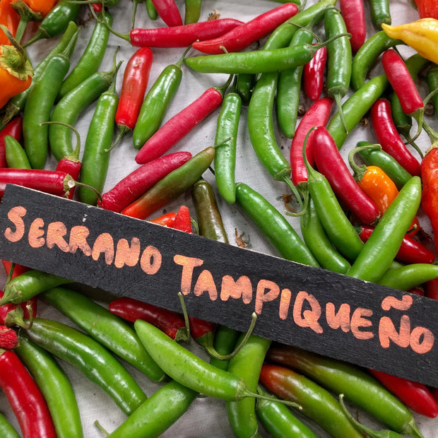 Hot Pepper - Serrano Tampiqueño - Sow True Seed
