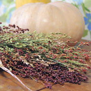 Sorghum - Hungarian Broom Corn - Sow True Seed