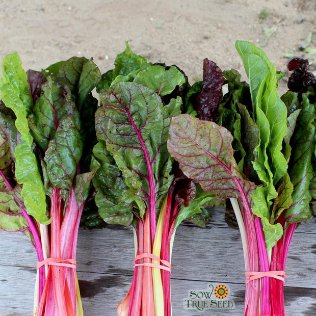 Swiss Chard Rainbow Blend seeds Sow True Seed Rainbow swiss chard