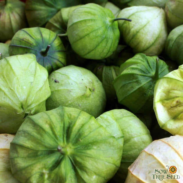 Tomatillo - Green, ORGANIC - Sow True Seed